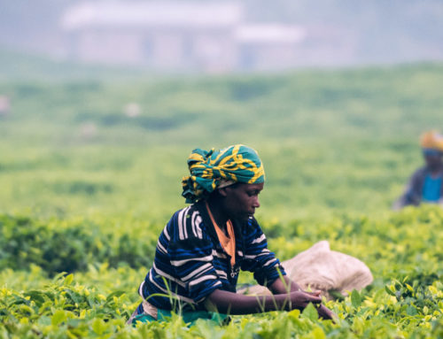 CALL FOR APPLICATIONS: Seeds of Good Anthropocenes – Transforming southern African food systems
